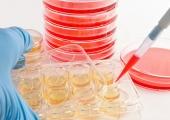 Стволовые клетки будут использовать дляувеличения груди