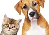 Домашним животным тоже можно сделать пластическую операцию