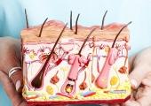 Ученые создали искусственную кожу