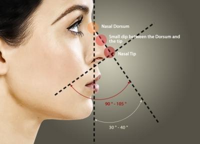 Идеальные пропорции носа