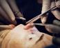 Процесс накладывания косметических швов