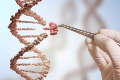 Редактирование гена CRISPR найдет применение в пластической хирургии