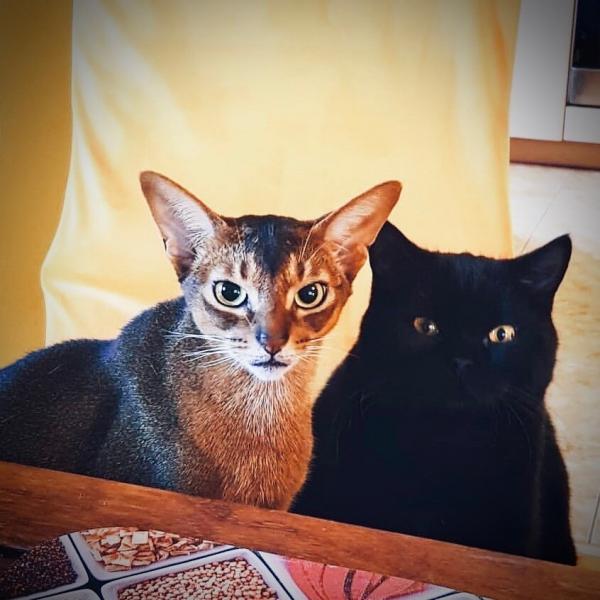 Любимые коты доктора Екимова